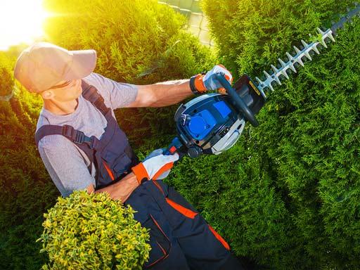 Arbeiter beim Hecke schneiden
